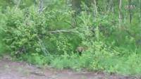 俄罗斯人不怕熊