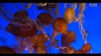 潜藏在美丽深海之中的外星生物_绝对叹为观止,目瞪口呆!