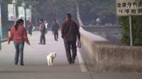 长跑与健康--武溪中学教职工第三届环湖跑11