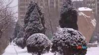 行记02 雪中的凌海红灯白雪雪松梨花坠枝头