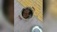 【波新闻】四川巴中男子砍下外婆头装铁锅