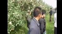 礼泉果友群2012年群友见面暨果树交流会3