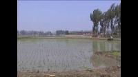 1人1天30亩 水稻 单人小型插秧机 秧盘式插秧机