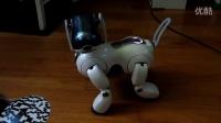 AIBO 机器狗  国外玩具视频——玩具视频网