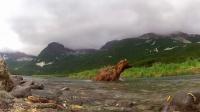 GoPro:灰熊要吃我的GoPro