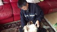 我的終身職業:狗狗按摩師,時薪面議。