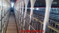 母猪料线1_0猪用饲养设备/猪场自动供料系统/母猪定量杯/母猪定量饲喂系统/母猪定量自动加料
