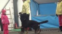 人犬都非常开心正向的ipo服从训练