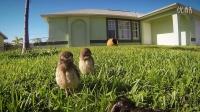 [K分享] GoPro:小猫头鹰轮流跳舞