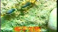 河南南阳温室养蝎子基地立体无冬眠人工特种养殖蝎子技术方法视频