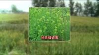 陶氏益农小麦技术片-完整版-28分钟(2)