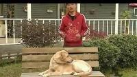 3 训练狗狗不在家中大小便