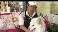 4 怎样让狗狗尊重主人