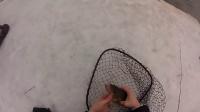 钓鱼视频野钓实战大鱼自制钓鱼饵料 钓鲮鱼最佳饵料配方