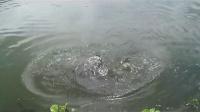 钓鱼视频大全2014 钓鱼视频野钓实战大鱼 垂钓技巧