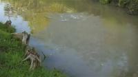 钓鱼视频水库野钓实战高清 春季水库钓鱼视频