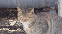 警惕的小猫期待美食
