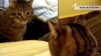 猫和镜子说不完的故事