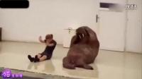 幽默搞笑猫咪视频第四十七期~人类身边的动物兄弟们~时长12:55(加长版)