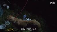 河北:1400只狗狗大营救! 志愿者泪洒迁安_感谢[拍客日记]!
