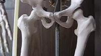 大腿根部内收肌银质针针刺治疗讲解