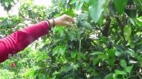 【蜜柚】健康理疗 | 柚花为什么这么壮