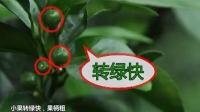 【产品】德庆柑橘广告2015年版[挪威海藻素]