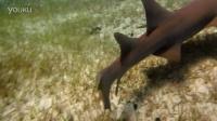 放流潜遇到护士鲨