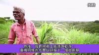 Lemongrass檸檬草-doTERRA多特瑞