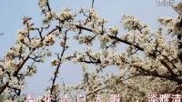 李玉刚——梨花颂