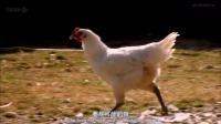 BBC美食 寻乡拾味法国人 第一季 03  里昂 中英双字幕