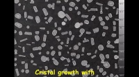 数字全息显微镜DHM观测糖水结晶的动态过程