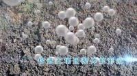腐植酸宣传片_标清