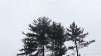 康州雪景中国年