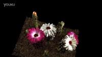 光场相机Raytrix镜头下的Flower-凌云光技术