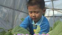 2-3-1-宝宝树早教 米卡成长天地 米卡世界小百科:泥土里的蔬菜