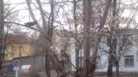 大树上,鸟儿挑逗喵星人--猫起了逮鸟心肠