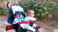 游览中华牡丹园