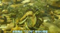 日本秃头鲨幼鱼1