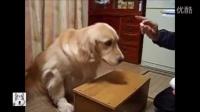 一大波汪星人来袭!搞笑可爱的狗视频9