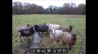 5分鐘聽不一樣童話故事系列《七隻小羊》