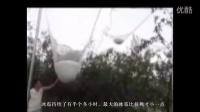 【拍客】陕西铜川等地连续强降雨和冰雹,庄稼毁灭损失惨重要