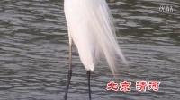2015北京清河白鹭1920x1080