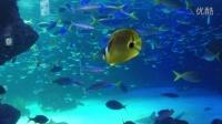 日本 水族馆 Aquiraus