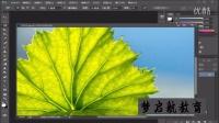 磁性套索工具 photoshop零基础视频教学教程