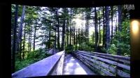 林间小路——用vofrid沉浸式、全视景、弧形大屏看视频