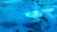 珠海长隆海豚与人共舞。