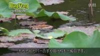 村上晴彦-蛙的操作手法