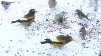 阳台上的小鸟们(2)