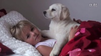 【You Tube奇趣精选】白色的拉布拉多小狗与可爱的小女孩!